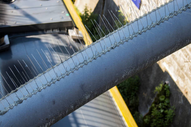 Bird spikes Bird spikes at a train station spiked stock pictures, royalty-free photos & images