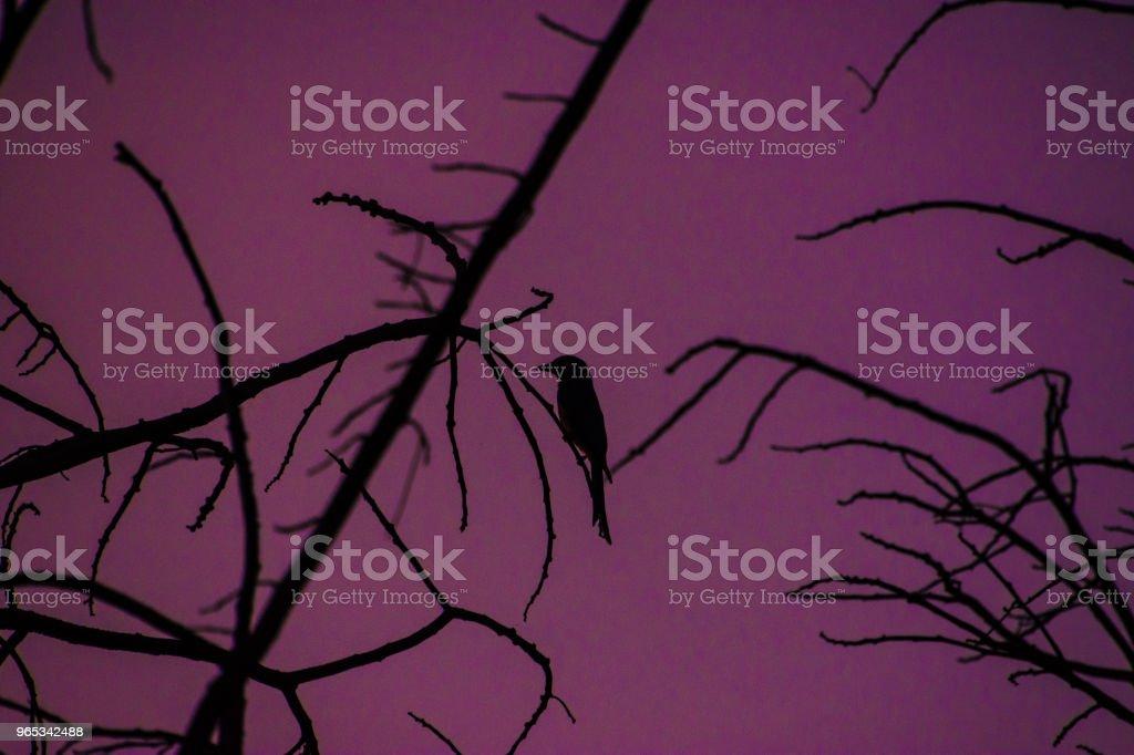 Stand de l'oiseau sur l'arbre. - Photo de Aile d'animal libre de droits