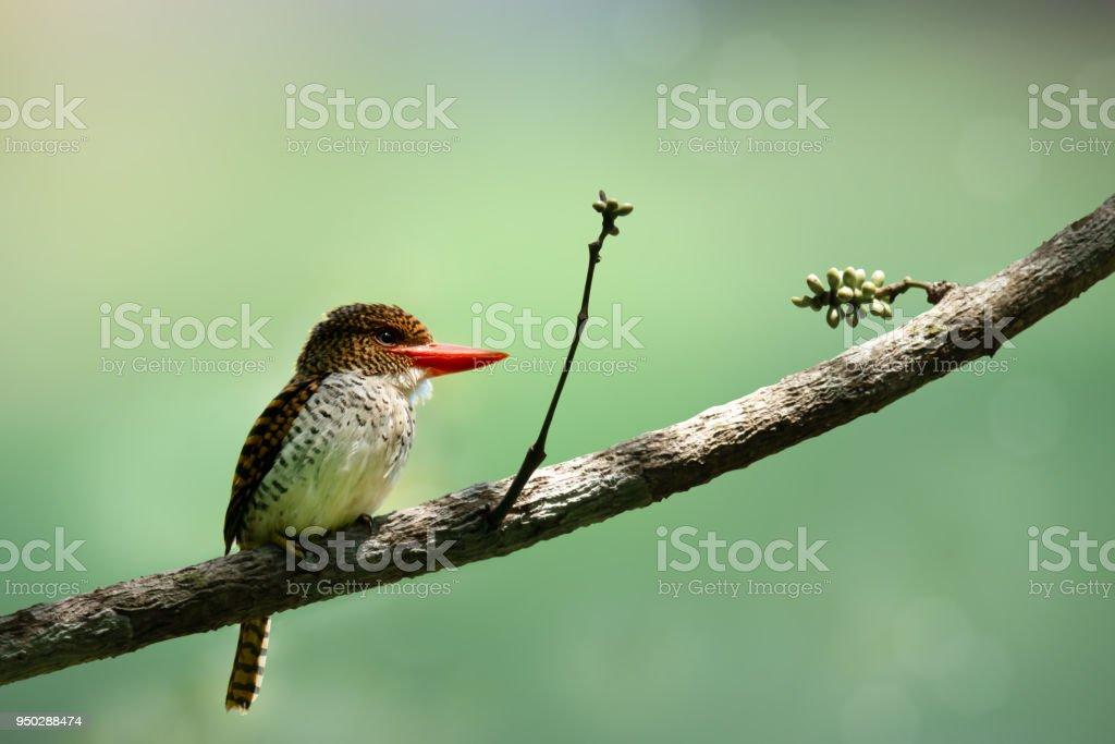 Bird stress stock photo