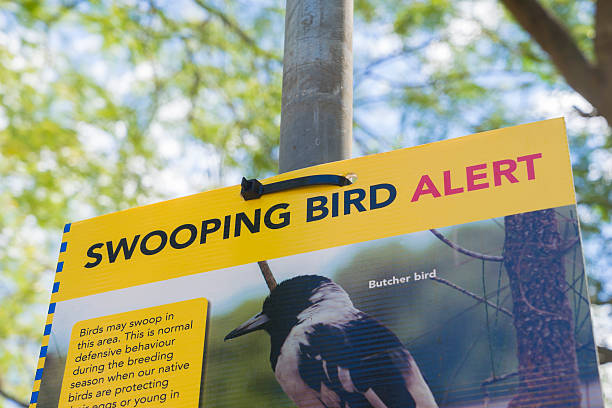 bird swooping warning sign - pie photos et images de collection