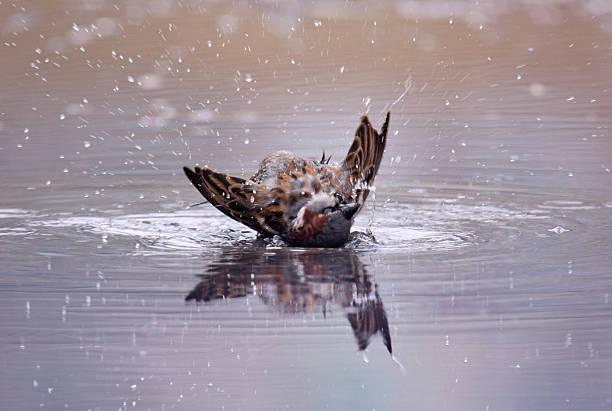 Bird taking a bath bildbanksfoto