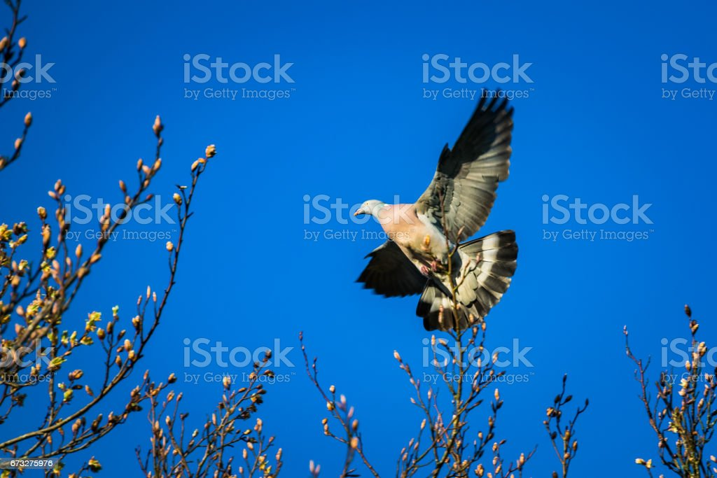 A bird taking off from the tree brench stock photo