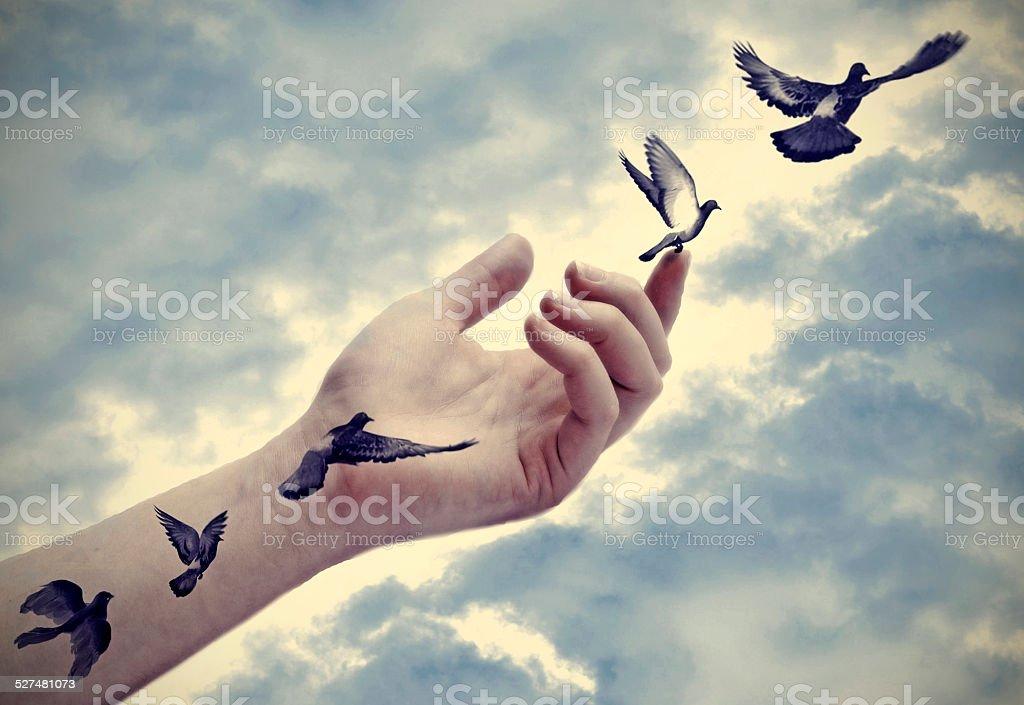 Uccello tatuaggi prendono vita, libertà concetto - foto stock