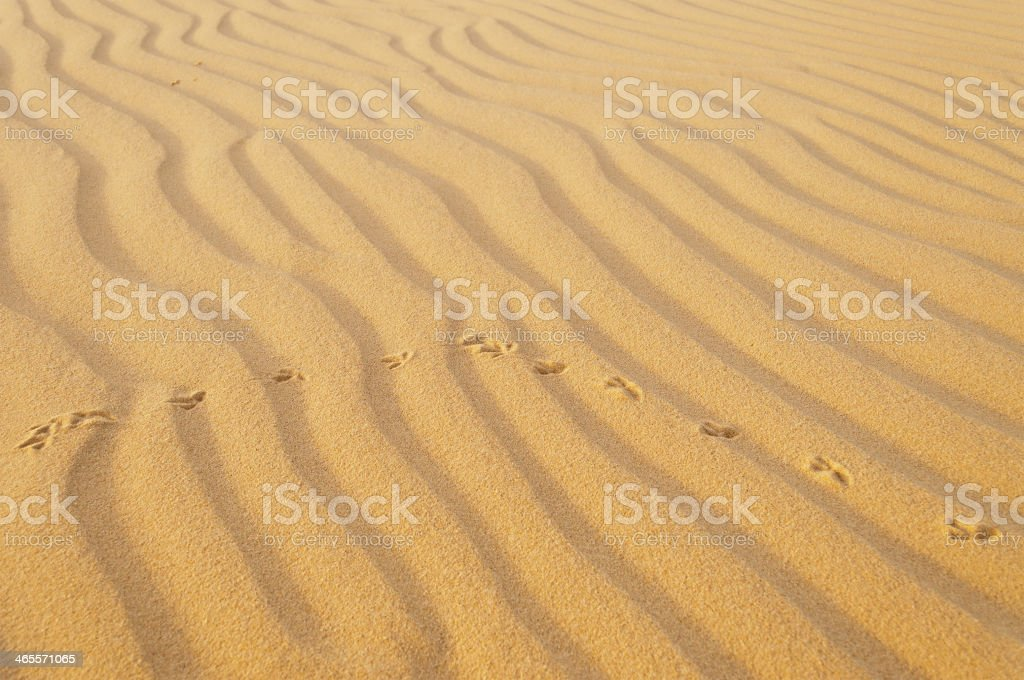 Bird traces in the sand. stock photo