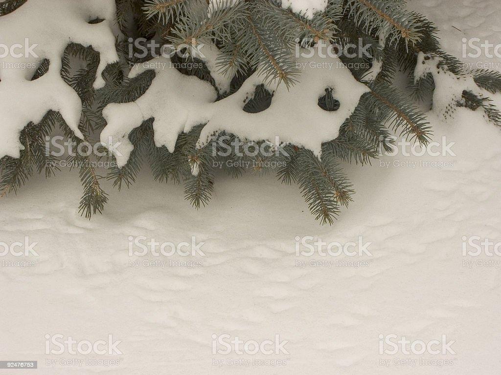 bird tracks in snow royalty-free stock photo