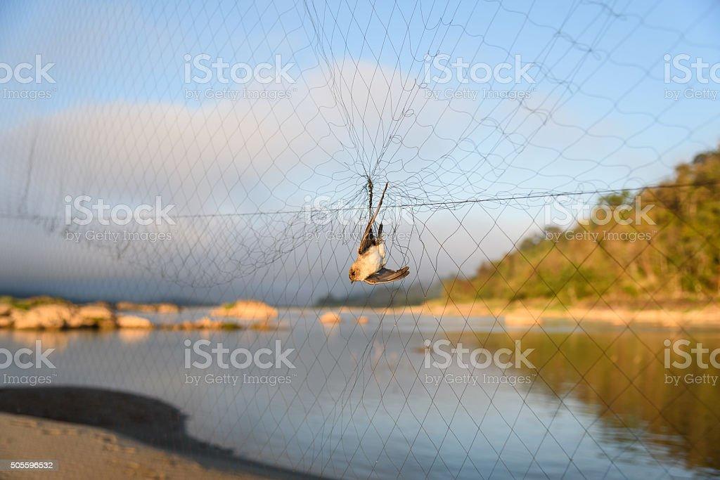 bird trap stock photo