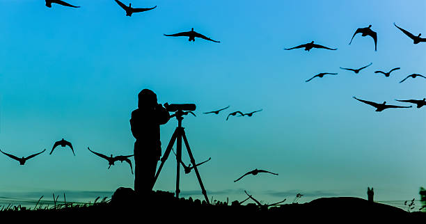 Vogel-Beobachtungs-Silhouette – Foto
