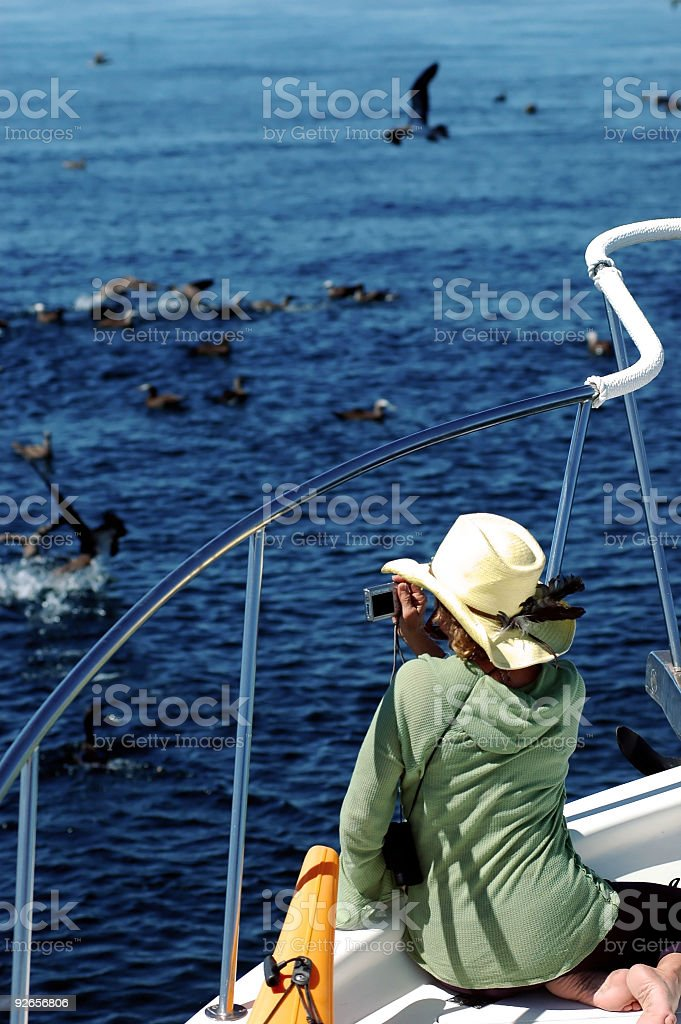Bird Watching royalty-free stock photo