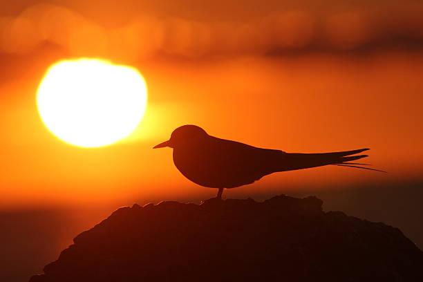 Bird watching sunset bildbanksfoto