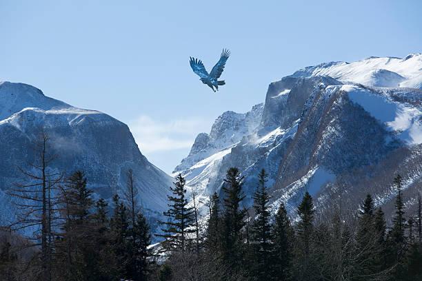 bird wheeling above snow mountain range - falcon bird stock photos and pictures
