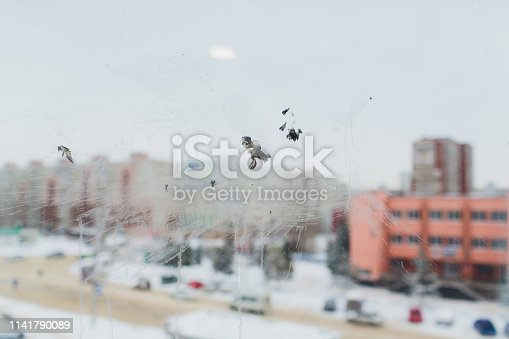 istock Bird window collision - The ghostly white print of the unfortunate bird probably a pigeon - showing feather, face detail. 1141790089