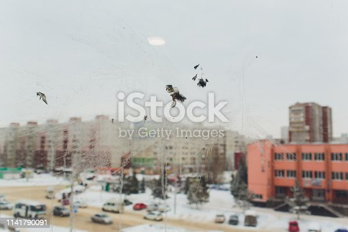 istock Bird window collision - The ghostly white print of the unfortunate bird probably a pigeon - showing feather, face detail. 1141790091