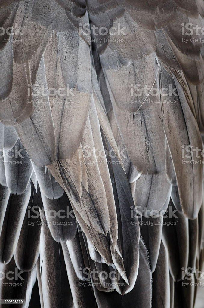 Bird wing detail texture stock photo