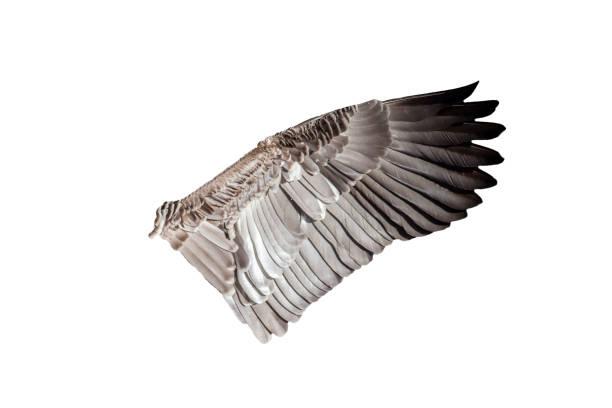 Bird wing stock photo