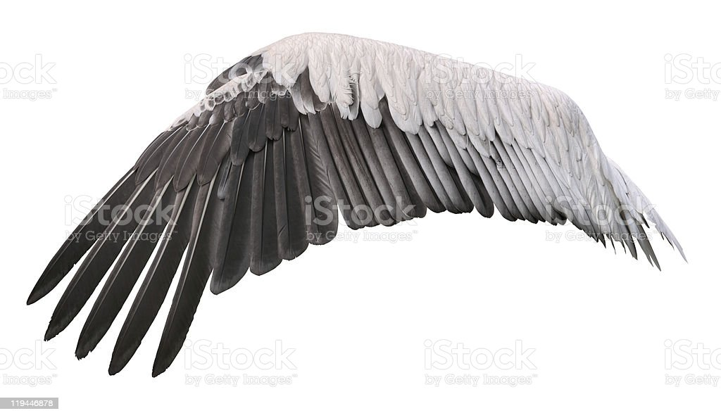 Bird wing spread cutout stock photo