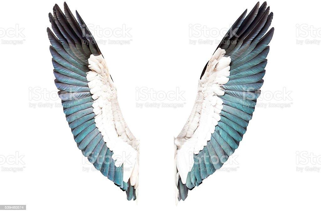 Vogel Flügel Isoliert Auf Weißem Hintergrund Stock-Fotografie und ...