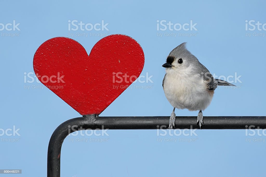 Bird With A Heart stock photo