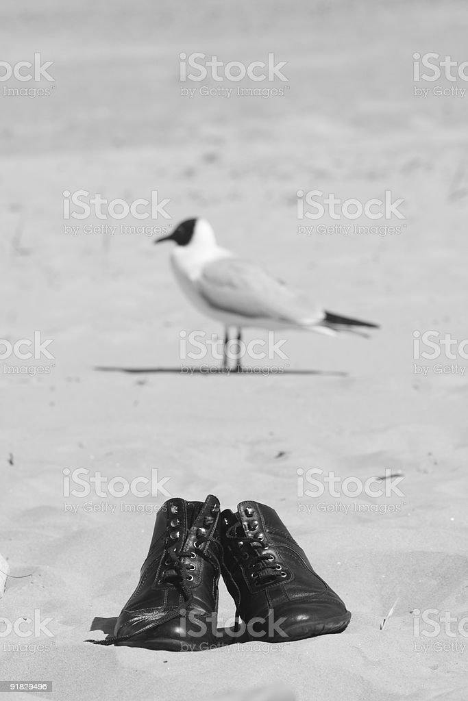 Bird with boots stock photo
