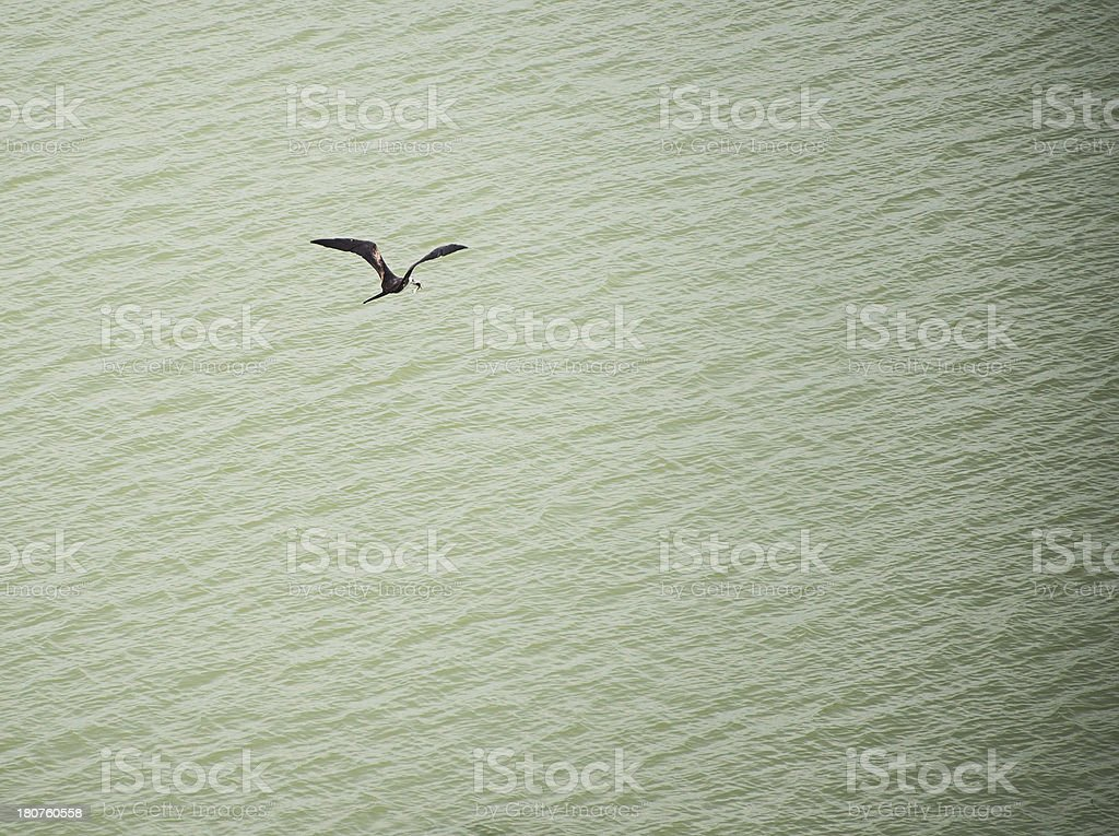 Bird with Fish in His Mouth royalty-free stock photo