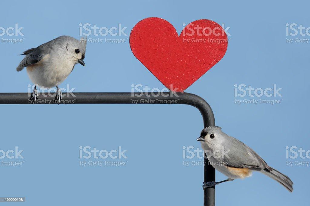Bird With Heart stock photo