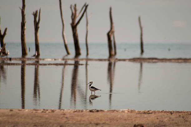 Pájaro con fino con las piernas en el mar muerto árboles - foto de stock
