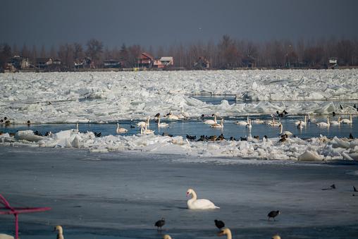 world of swans