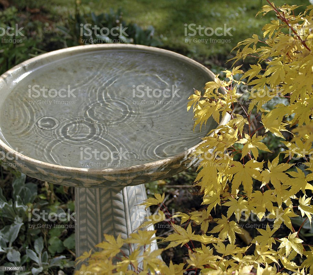Birdbath and Maple stock photo