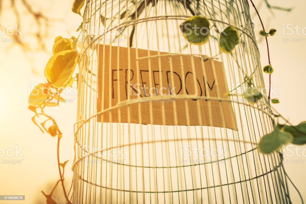birdcage with word freedom inside stock photo