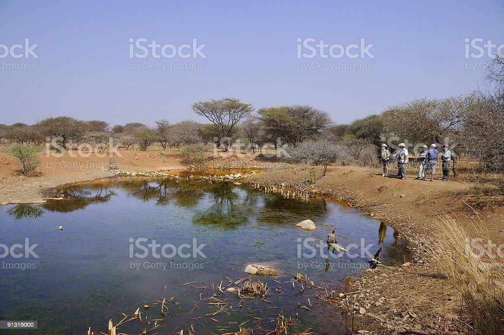 Birders At Waterhole royalty-free stock photo