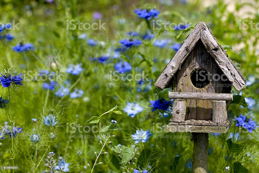 Birdhouse Among Blue Flowers stock photo