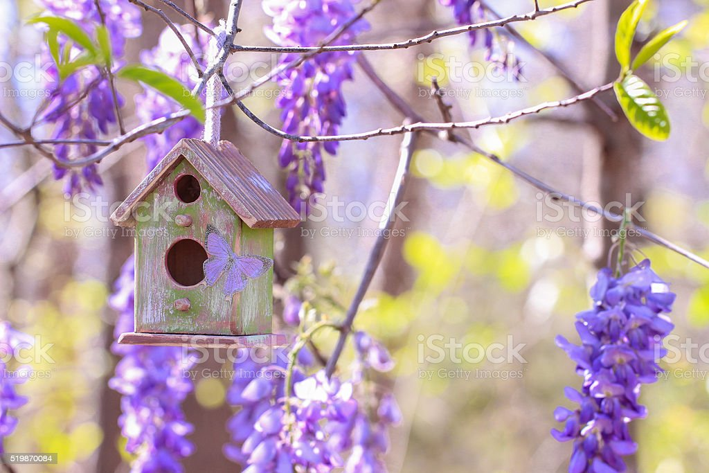 Birdhouse hanging in tree with purple flowers stock photo