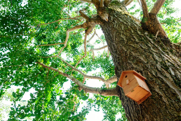 birdhouse in forest - 介護 zdjęcia i obrazy z banku zdjęć