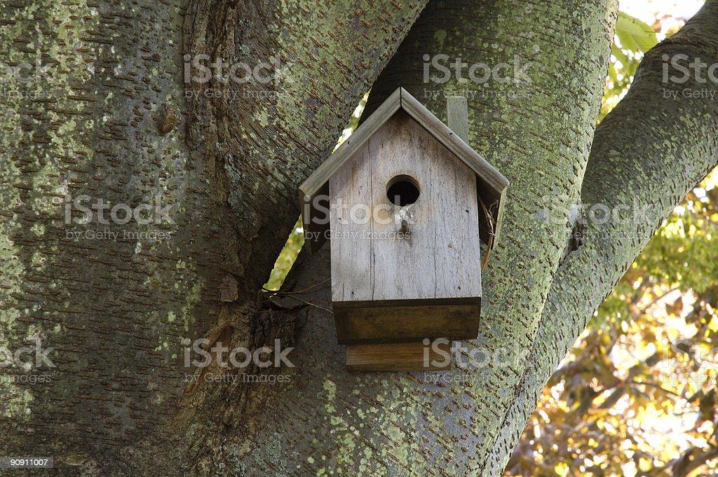 Birdhouse in Mossy tree stock photo