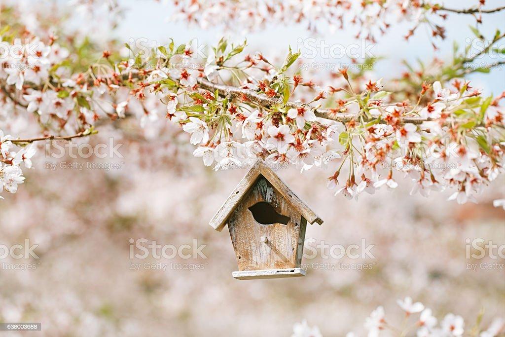 Birdhouse in Spring with blossom cherry flower sakura stock photo