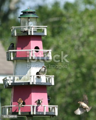 a variety of a birds at a lighthouse shaped bird house more birds