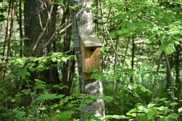 Birdhouse on a tree trunk in a green forest stock photo