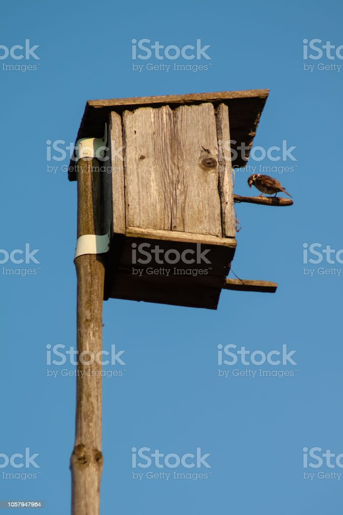 Birdhouse on a wooden pole against a clean blue sky. stock photo
