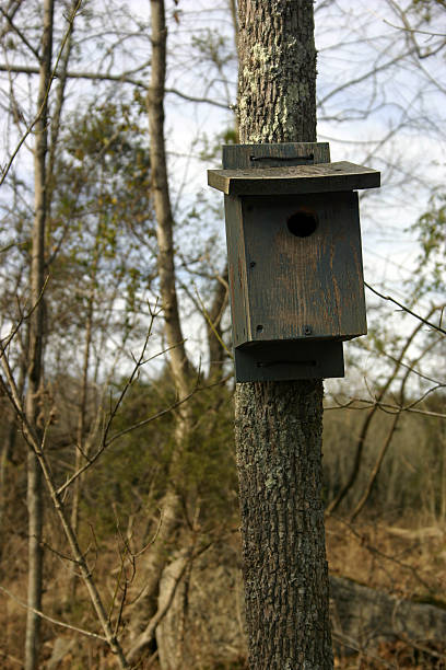 Birdhouse on Park Lands stok fotoğrafı
