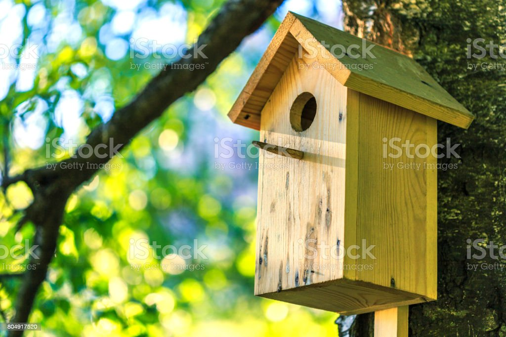 Birdhouse on the birch stock photo