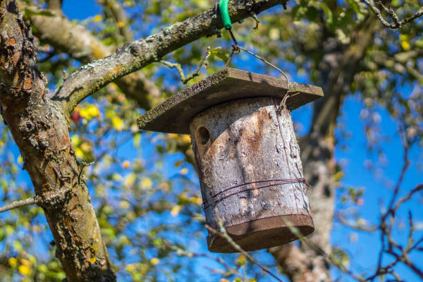 Birdhouse (Bird nest box) stock photo