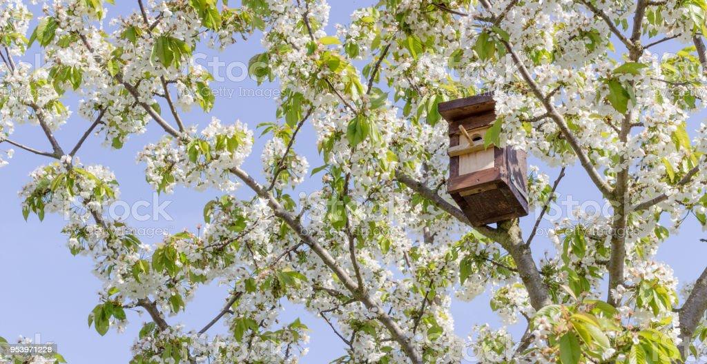 Vogelhäuschen  – Foto