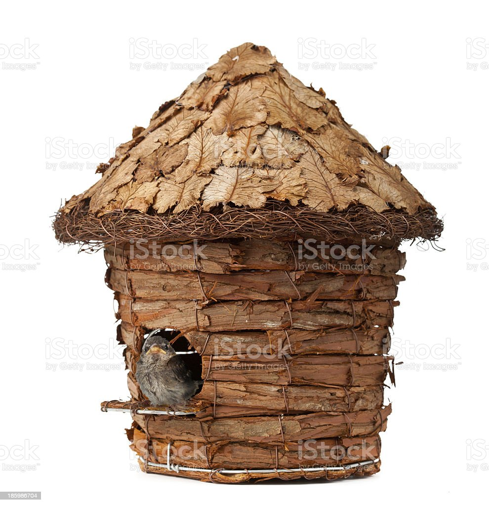Birdhouse with little sparrow royalty-free stock photo