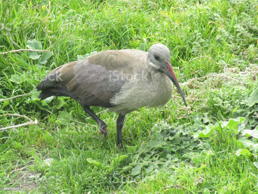 Birdlife royalty-free stock photo