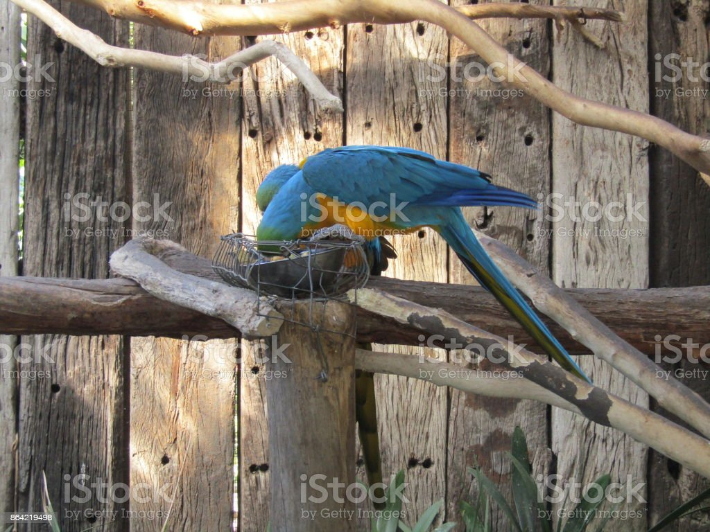 Birdlife royalty-free stock photo