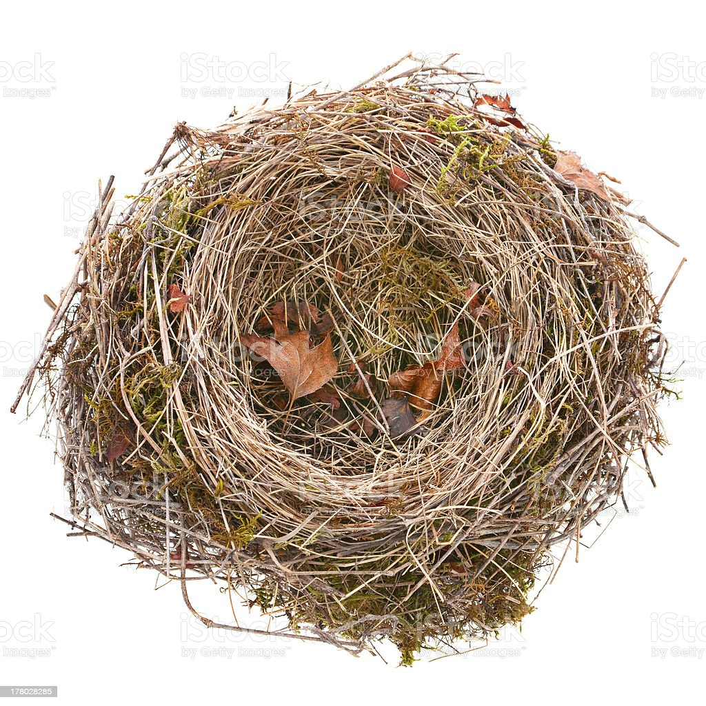 Bird-nest empty stock photo