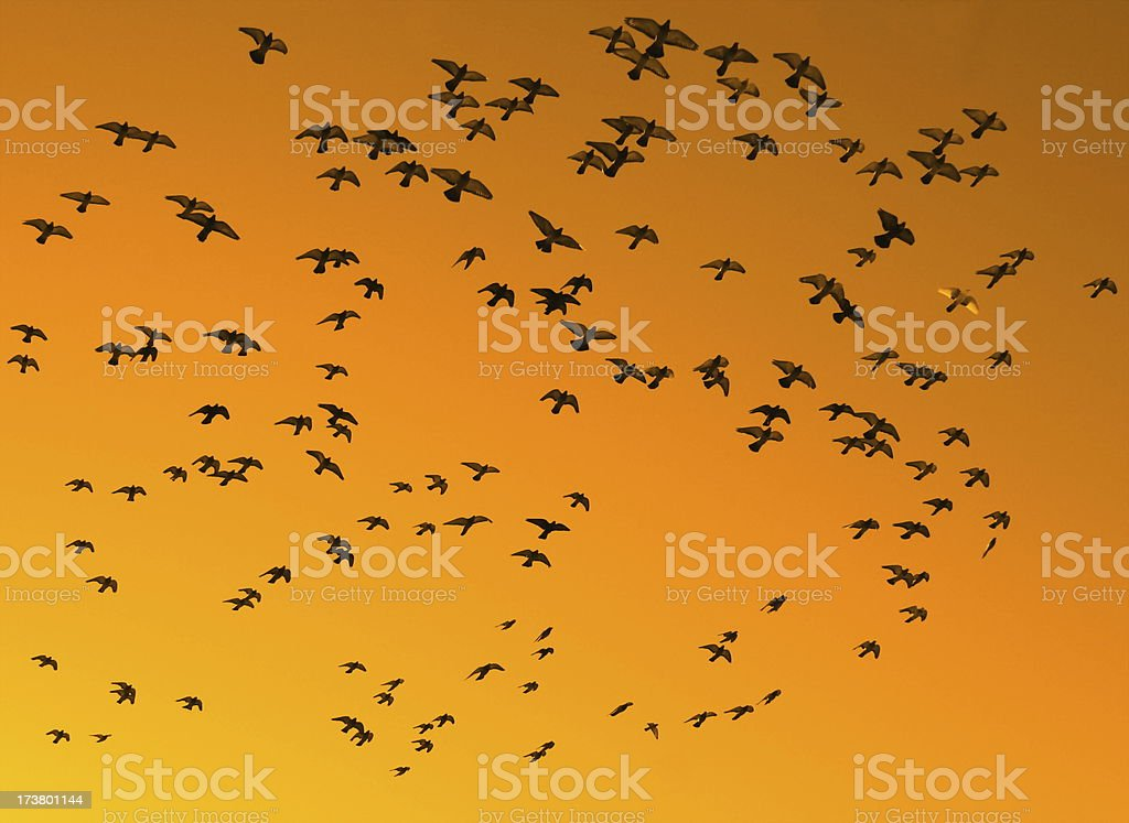 Birds Against An Orange Sky royalty-free stock photo