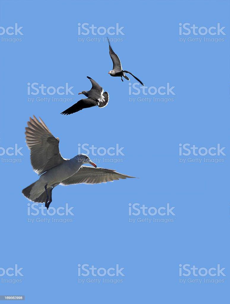 Birds against the blue stock photo