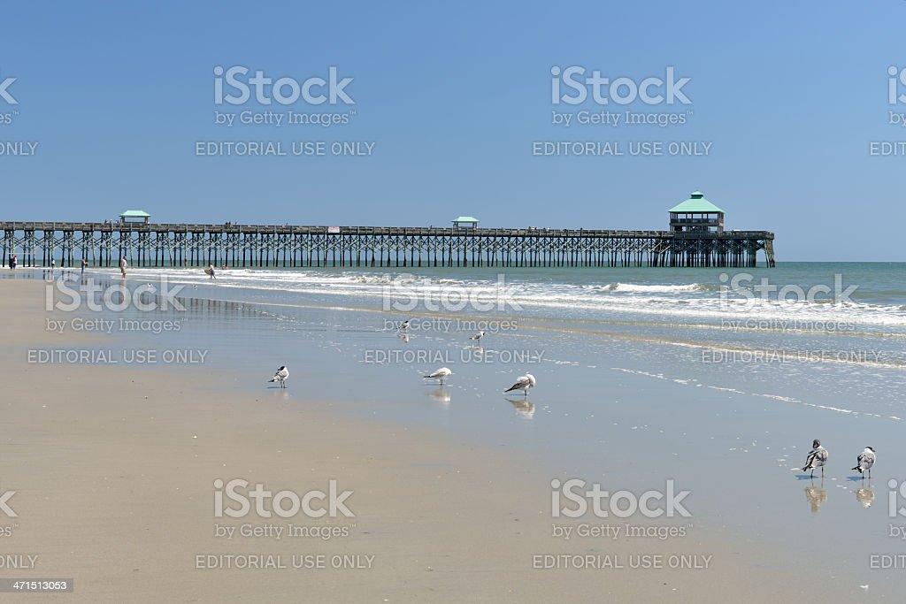 Birds and Beach stock photo