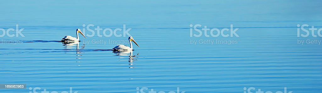 Birds and blue stock photo