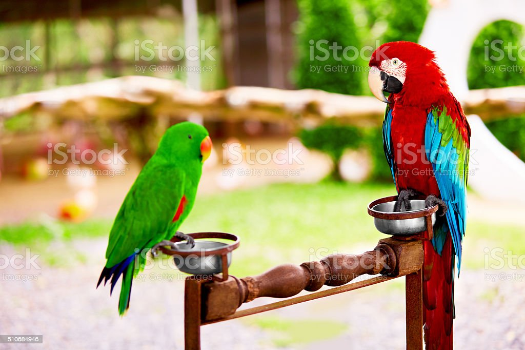 Birds, Animals. Closeup Portrait Of Bright Colorful Green-winged Red...